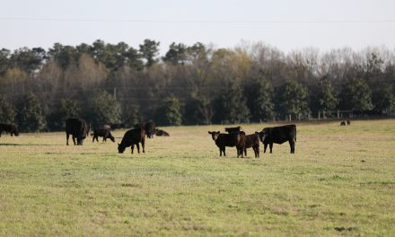 More Premium Beef Stimulates More Demand