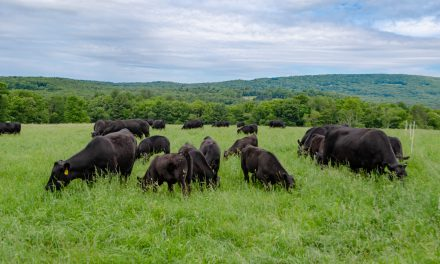 Protecting the Watershed and Raising Quality Angus Beef